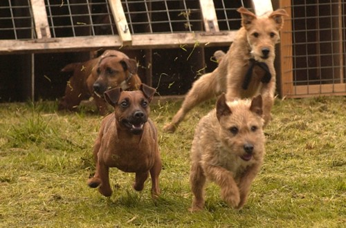 The Terrier Race